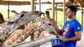 Giraff feed-yash
